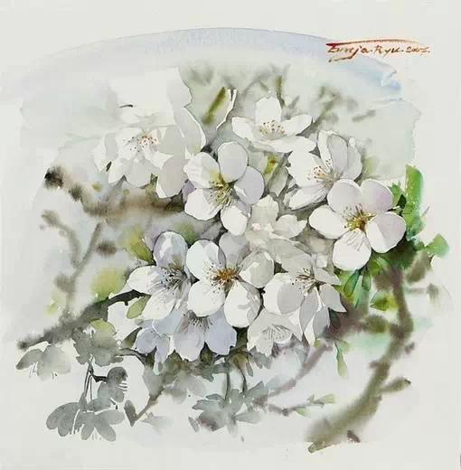 优秀的水粉画花作品,月季花