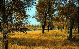 秋天的古诗句
