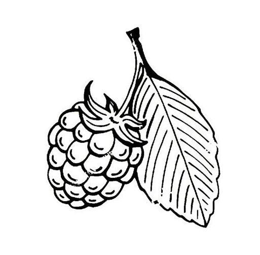 漂亮的水果简笔画图片,草莓简笔画
