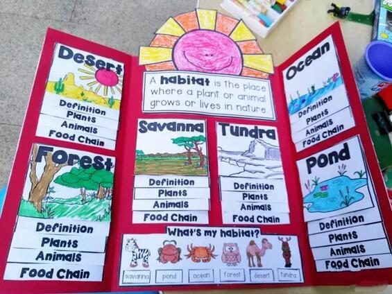 儿童创意手工笔记小书,企鹅的成长过程