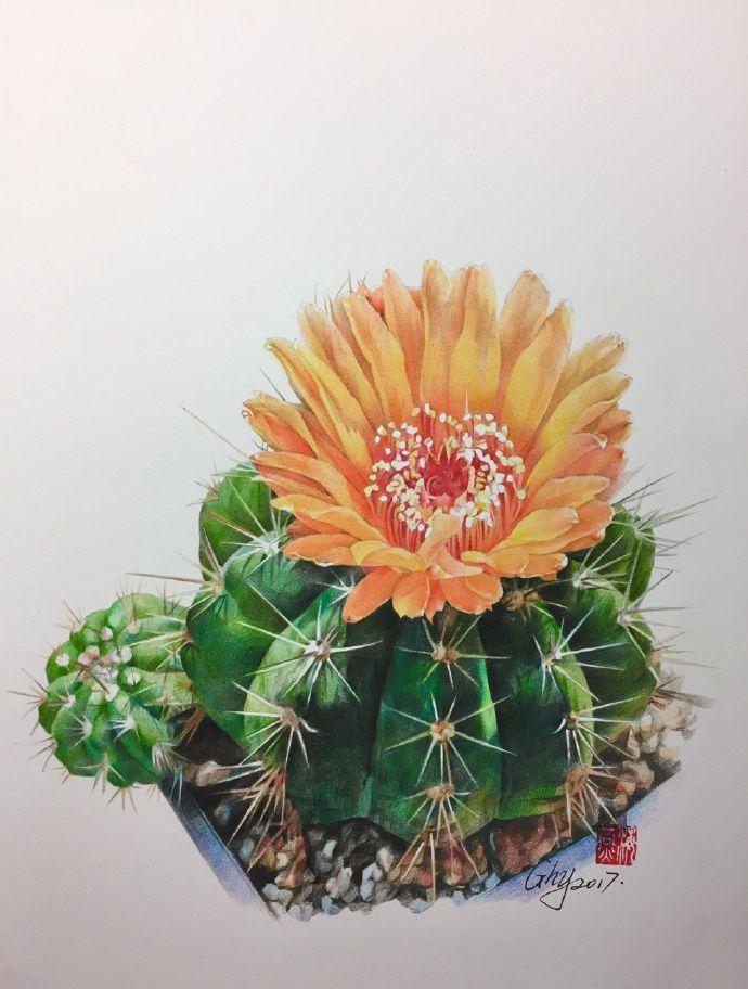 彩铅花卉手绘图片教程,彩铅香雪兰教程图解