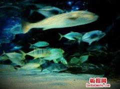 不是所有的鱼都生活在同一片海里