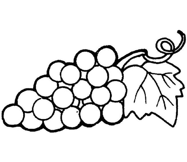 好看的水果简笔画图片,菠萝简笔画