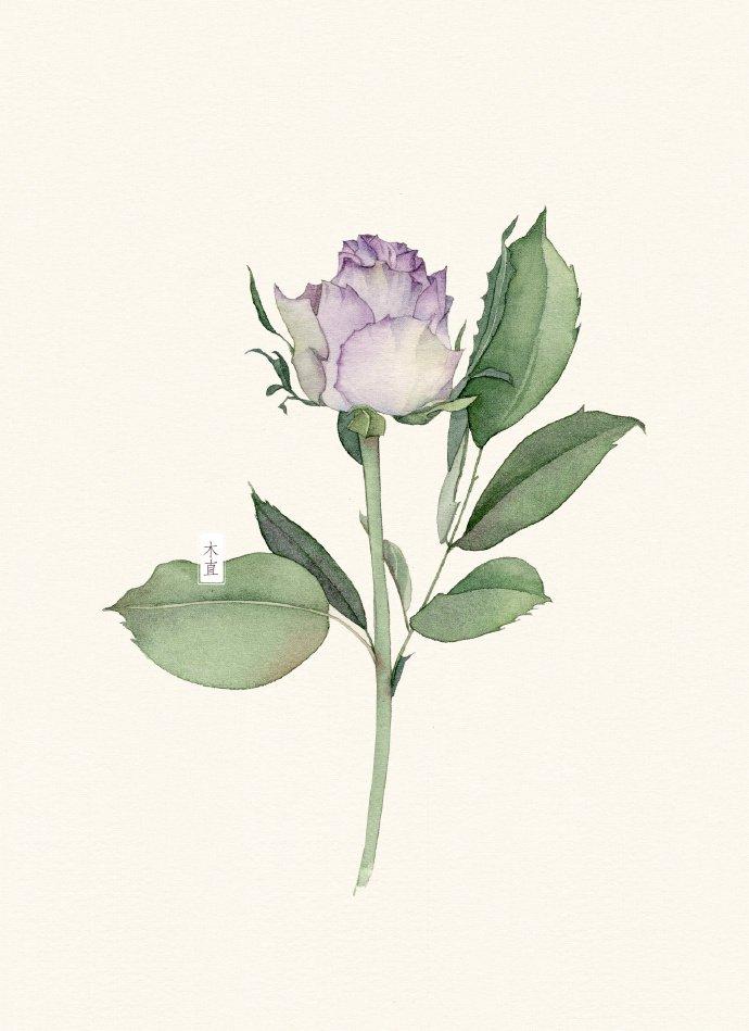 水彩画小清新花卉教程,郁金香水彩画