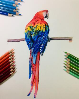 彩铅画教程步骤图花,向日葵彩铅画