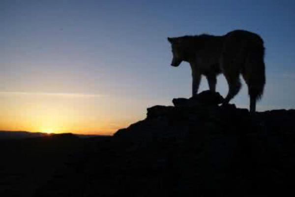 狼图腾读后感