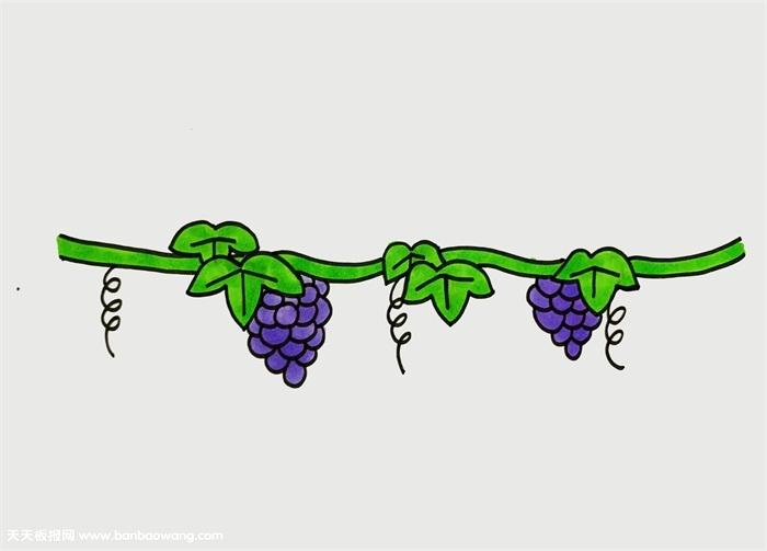 葡萄树怎么画